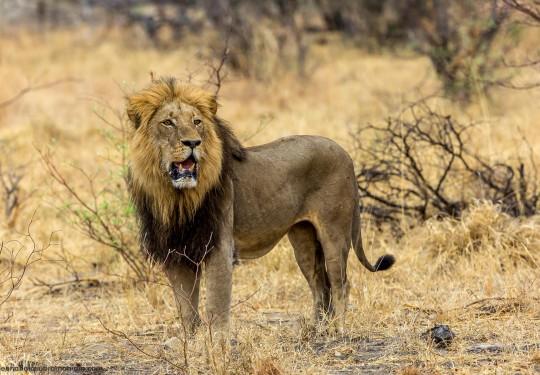 Namibian intruder