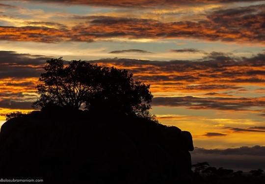 Sunset amidst the Kopjes of Tanzania