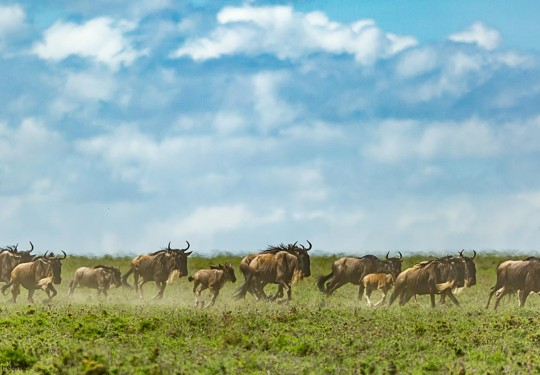 Migration 2015 Tanzania