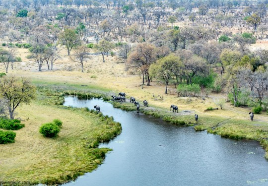 Aerial view of the Elephant family in the selinda spillway