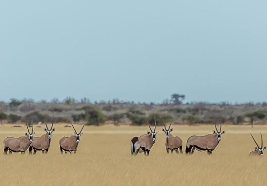 Oryxscape