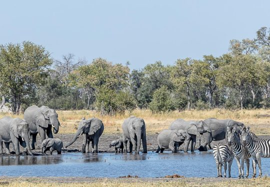 The musings around  the waterhole