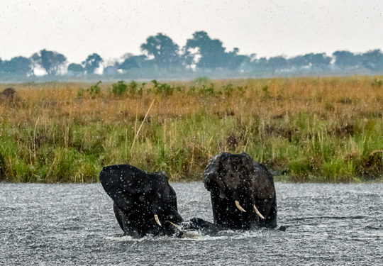 Rain and the elephants of Botswana